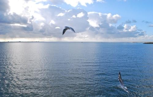 Marsdiep, vanaf de veerboot, 10 november 2013, 14.10 u